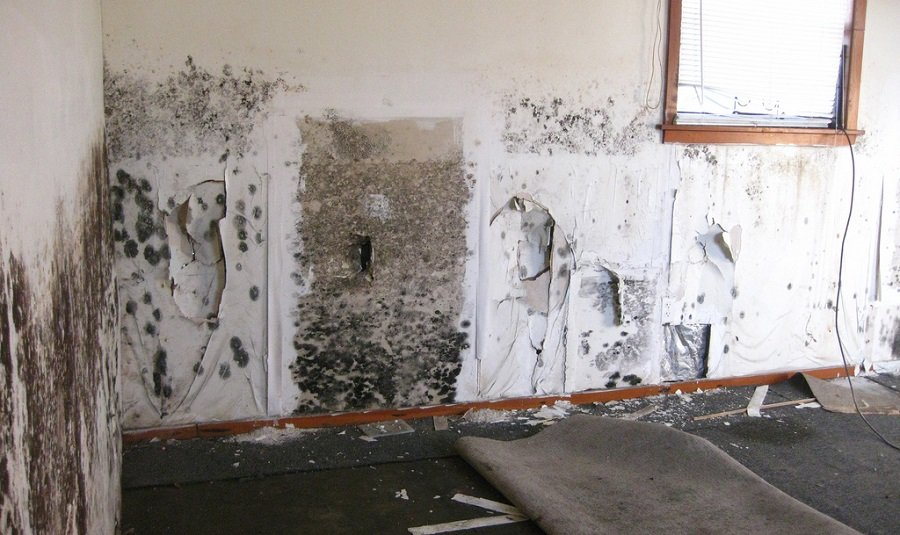 Get Rid Of Black Mold In House