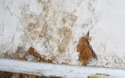 What Questions To Ask Your Mold Removal Company