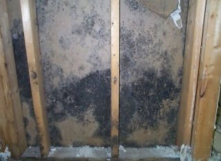 How To Remove Mold From Inside Walls