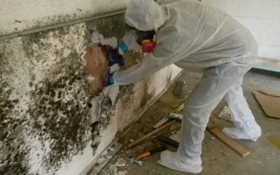 Why Hire A Mold Remediation Company
