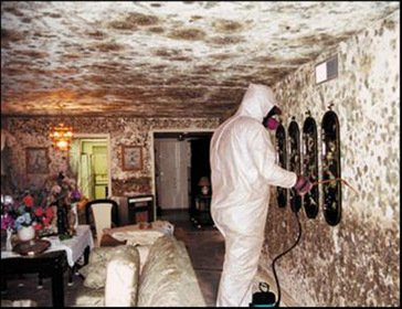 Remove Mold From Drywall